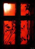 Red Window by ma-ryu-s
