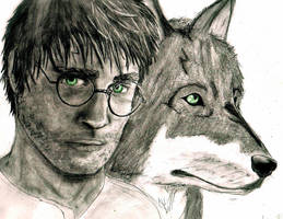 Harry Potter Wolf Animagus by ashleymd7
