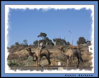 Riding a camel by konjit