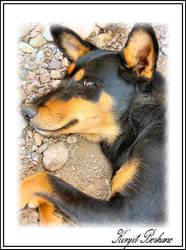 Buddy shari's dog by konjit