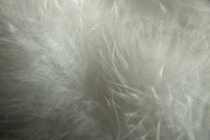 Feather I by Mifti-Stock