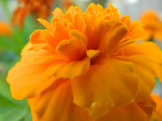 In Your Face Orange by SimOtakuGirl