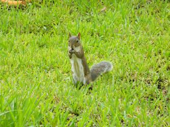 Squirrel Friend by SimOtakuGirl