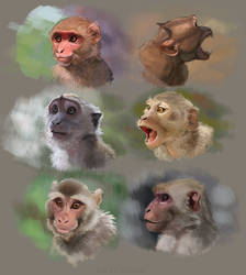 Macaque Studies by Kitchiki