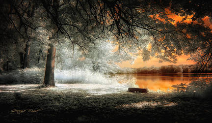 Beauty is a light in the heart by lowapproach