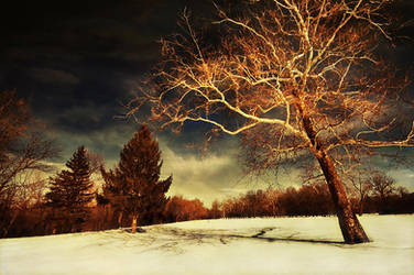 Against A Winter Sky by lowapproach