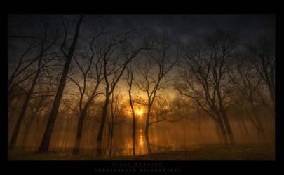 Misty Mornings by lowapproach