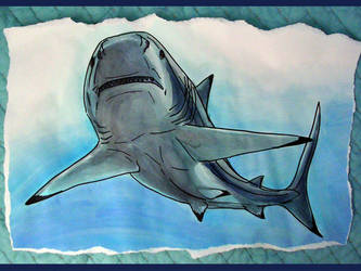 Shark- watercolor and marker by SMcNonnahs