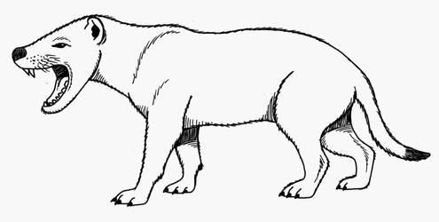 Hyaenodon by Cousture
