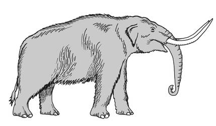 Mastodonte by Cousture