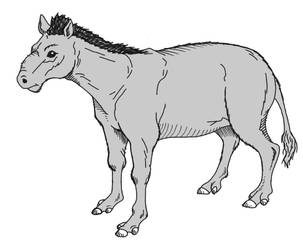 Mesohippus by Cousture