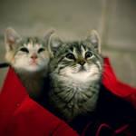 baggirls by MelekKoncuyKoruklu