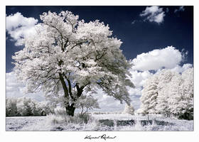 White Calm by zozzy1980