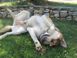 Dog Stock 11 by fuzzy-raspberry