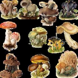 Fungi Mushroom 3 PNG by chaseandlinda