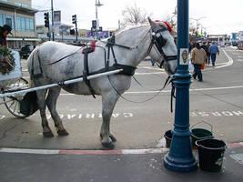 White Horse by DigitalVampire107