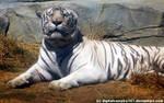 Tiger Tiger by DigitalVampire107