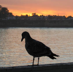 Lone Bird at Sunset by Vinator