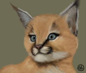 Caracal by The-life-in-me