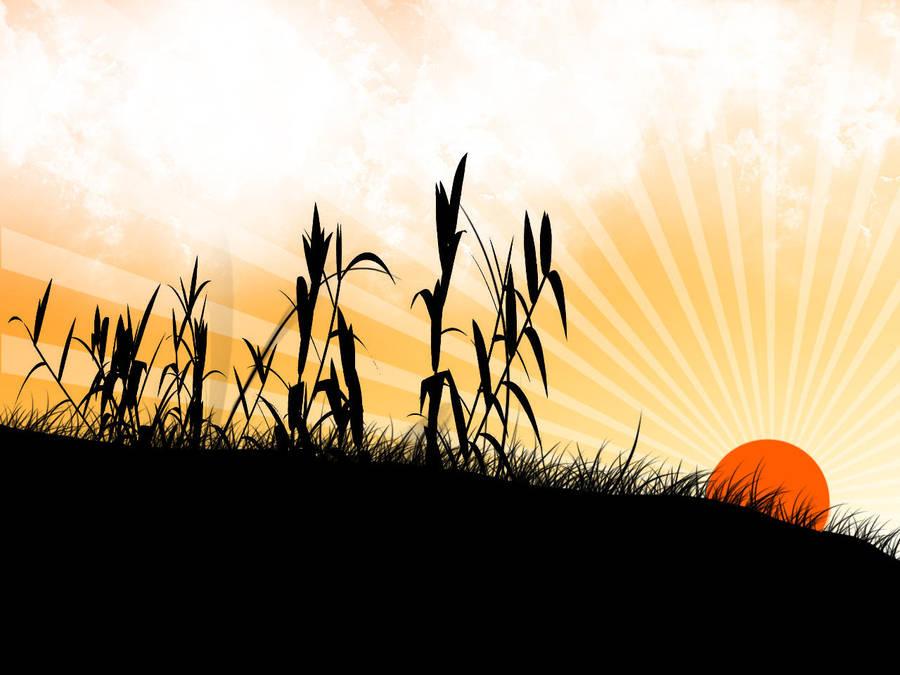 Sunshine by Vreckovka