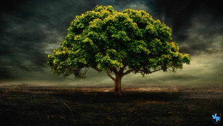 Tree in the destruction by Vreckovka