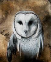 Owl white carcoal by FeralFacade