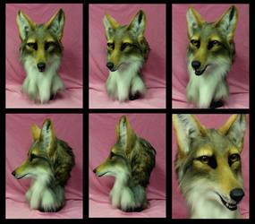 Coyote turnaround by FeralFacade