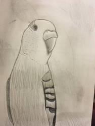 Bird by SajhHope