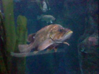 Oregon Coast Aquarium - Fish 22 by SeverFlameSkullRage