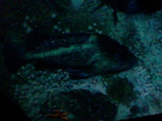 Oregon Coast Aquarium - Fish 25 by SeverFlameSkullRage