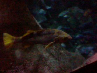 Oregon Coast Aquarium - Fish 28 by SeverFlameSkullRage