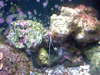 Oregon Coast Aquarium - Shrimp by SeverFlameSkullRage