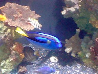 Oregon Coast Aquarium - Fish 29 by SeverFlameSkullRage
