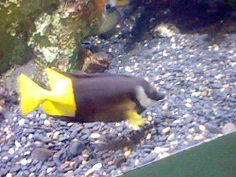 Oregon Coast Aquarium - Fish 31 by SeverFlameSkullRage