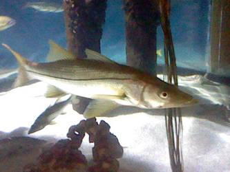 Oregon Coast Aquarium - Fish 32 by SeverFlameSkullRage
