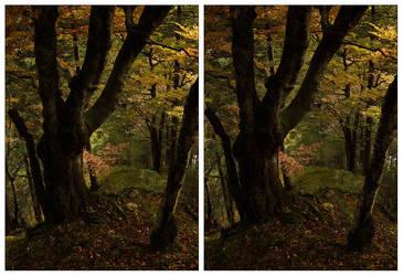 3D.forest - crossview by yatu-ex