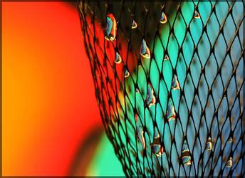 Wiry by cblue