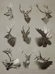 Cervidae Portrait Studies by AlexJacob