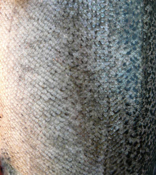Fish Scales for Mermaid Stock by Enchantedgal-Stock