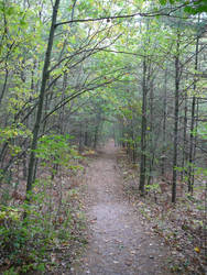 Forest Path Background Stock by Enchantedgal-Stock