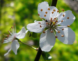 Spring Flower Close Up Stock by Enchantedgal-Stock