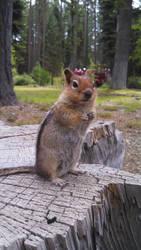 Squirrels by annabethalizz