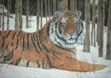 Siberian Tiger by SavageArt
