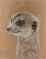 Meerkat by SavageArt