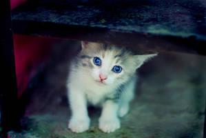 blue-little by yusufOrta