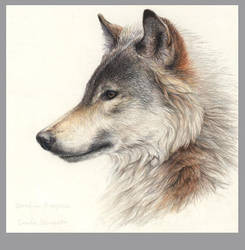 Wolf by chipset