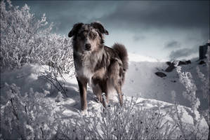 Winter by chipset