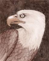 Eagle in Brown by J-Ian-Gordon