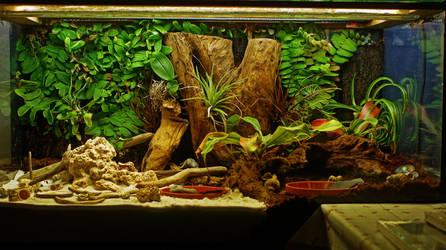 Hermit Crab Terrarium by ChromaticBokeh