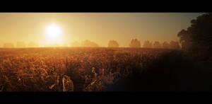 Morning Fog by ChromaticBokeh